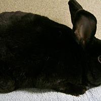 Adopt A Pet :: Sheldon - Harrisburg, PA