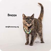 Adopt A Pet :: Brenna - Riverside, CA