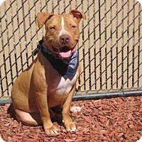 Adopt A Pet :: *COOPER - Norco, CA