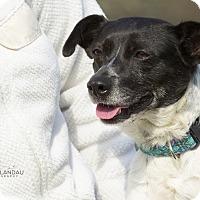 Adopt A Pet :: Noel - Nyack, NY
