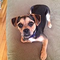 Adopt A Pet :: Salemm - Alpharetta, GA