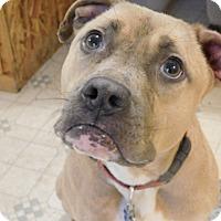 Adopt A Pet :: BENNY - Millerstown, PA