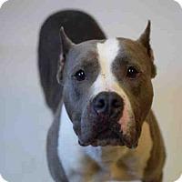 Adopt A Pet :: SISSY - Atlanta, GA