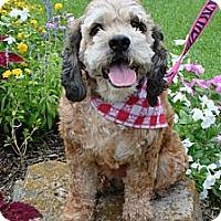 Adopt A Pet :: Hope - Sugarland, TX