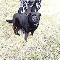 Adopt A Pet :: # 091-14 @ Animal Shelter - Zanesville, OH