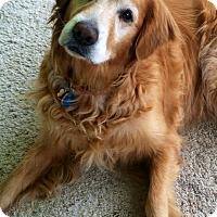 Adopt A Pet :: Buttercup - Yorktown, VA
