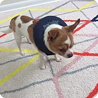 Adopt A Pet :: Jonah - Rockaway, NJ