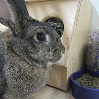 Adopt A Pet :: Emmy Lou - Newport, DE