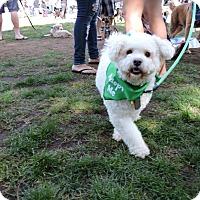 Adopt A Pet :: Cielo - San Diego, CA