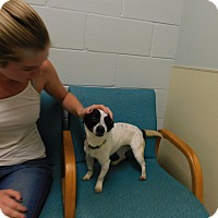 Adopt A Pet :: Roxy - West Deptford, NJ