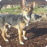 Adopt A Pet :: Forest - Yreka, CA