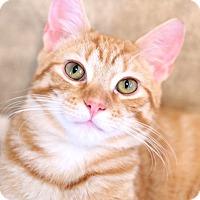 Adopt A Pet :: Dusty - Trevose, PA