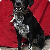 Adopt A Pet :: Holly - Lacon, IL