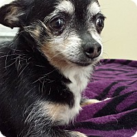 Adopt A Pet :: Coco - Westminster, CA
