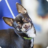Adopt A Pet :: Jenny - Germantown, OH
