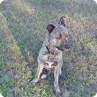 Adopt A Pet :: Butch - Sweet Boy! - New Hartford, NY