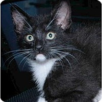 Adopt A Pet :: Bandido - Encinitas, CA
