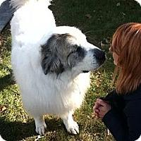 Adopt A Pet :: Ben - Minneapolis, MN