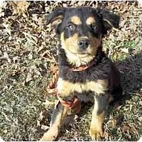 Adopt A Pet :: Darby - Fostered in CT - Adamsville, TN