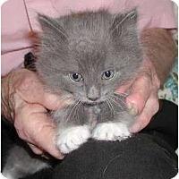 Adopt A Pet :: Raya - Clementon, NJ