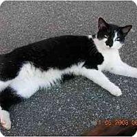Adopt A Pet :: Laszy Susan - Union, SC