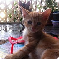 Adopt A Pet :: Hero - Ft. Lauderdale, FL