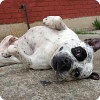 Adopt A Pet :: Chewy - Kimberton, PA