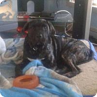 Adopt A Pet :: Stiggy - Northumberland, ON