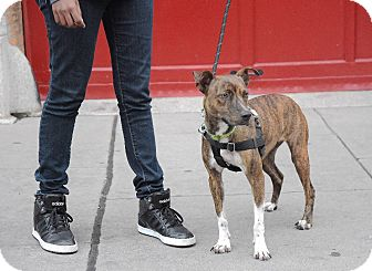 Hound (Unknown Type) Mix Dog for adoption in Jersey City, New Jersey - Joyce Byers