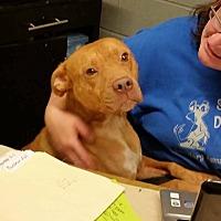Adopt A Pet :: Delaware - Lewisburg, TN