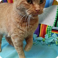 Adopt A Pet :: Goldie - South Haven, MI