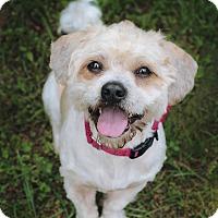 Adopt A Pet :: Marty - Marietta, GA