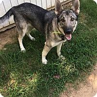 Adopt A Pet :: Arianna - Greeneville, TN