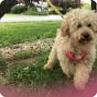 Adopt A Pet :: Dagwood - Mechanicsburg, OH
