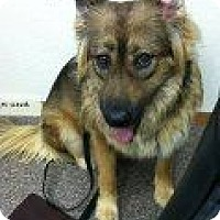 Adopt A Pet :: Bella - Alliance, NE