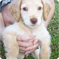 Adopt A Pet :: Sinbad - Sugarland, TX