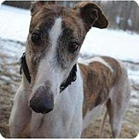 Adopt A Pet :: Legacy (BL Legacy) - Chagrin Falls, OH