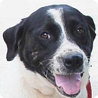 Adopt A Pet :: Lady - Chapel Hill, NC