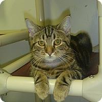 Adopt A Pet :: Tricia - Hamburg, NY