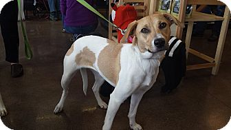 Labrador Retriever/Hound (Unknown Type) Mix Dog for adoption in Cincinnati, Ohio - Pebbles: Terrace Park