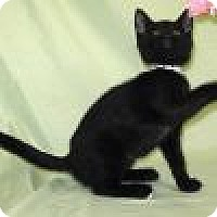 Adopt A Pet :: Sonja - Powell, OH