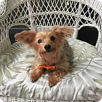 Adopt A Pet :: Precious - Leesburg, FL