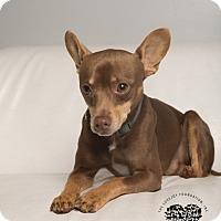 Adopt A Pet :: Rudy - Inglewood, CA