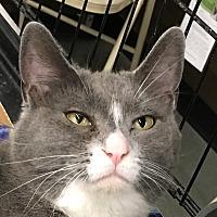 Adopt A Pet :: Cybil - Winchester, CA