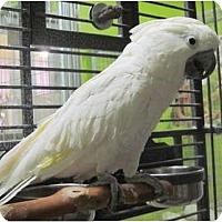 Adopt A Pet :: Winston - Edgerton, WI
