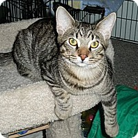Adopt A Pet :: Gomer - Milwaukee, WI