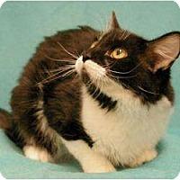 Adopt A Pet :: Duncan - Sacramento, CA