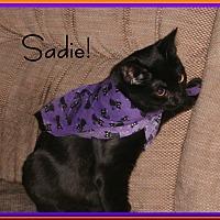Domestic Mediumhair Kitten for adoption in Santa Clarita, California - Sadie