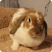 Adopt A Pet :: Nina - Hillside, NJ