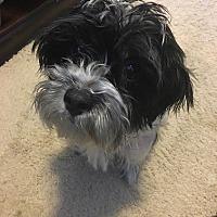 Adopt A Pet :: LOGAN - Eden Prairie, MN
